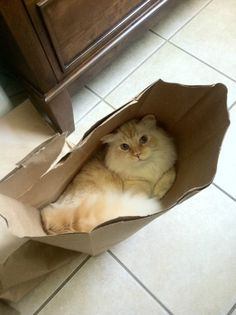 the cat's in the bag...
