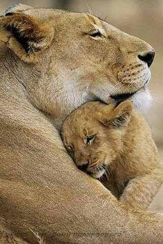 Nessun posto è più sicuro delle braccia della mamma!