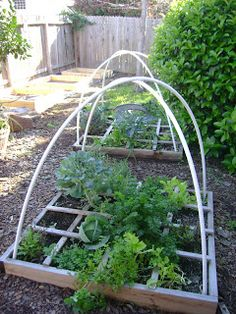 Growing Watermelon in Your Houston Garden Garden Things