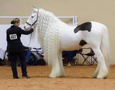 THE WORLD'S MOST BEAUTIFUL HORSE FOUND IN TURKEY