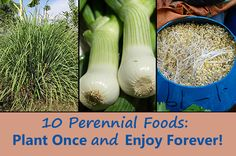 10 Perennial Foods: Plant Once and Enjoy Forever! Maybe you have a thriving garden but just want to add more so that you can reduce trips to the grocery Perennial Vegetables, Planting Vegetables, Growing Vegetables, Vegetable Garden, Garden Plants, Vegetable Dishes, Veggies, Organic Gardening, Gardening Tips