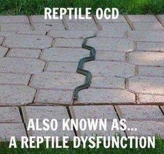 Reptile OCD