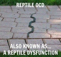 Reptile OCD. Don't know whether to laugh or cringe. So I'll cringe first, then laugh