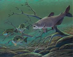 Acrylic Limited Edition Fish Print Catfish chasing Bluegills Freshwater 11 x 14 Watercolor Wall Decor by Doug Walpus by dougwalpusartstudio. Explore more products on http://dougwalpusartstudio.etsy.com