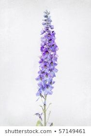 New Flowers Tattoo On Shoulder Larkspur Ideas - Top tattoo models Delphinium Tattoo, Delphinium Flowers, Delphiniums, July Birth Flower, Birth Month Flowers, Lila Tattoo, Tattoo On, Tattoo Quotes, Top Tattoos