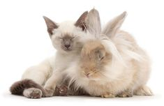Animal Photographer Brought Together Adorable Cats And Their Bunny Doppelgängers