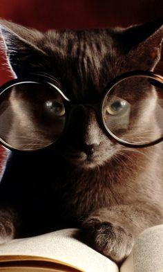 Smart Cat Cat kitten adorable gorgeous love
