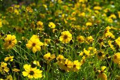 flores do campo, primavera, natureza