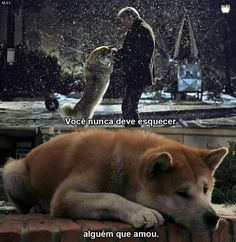 Dogs Memes Human Ideas For 2019 Super 8 Film, Film Logo, Hachiko Dog, A Serbian Film, La Haine Film, Boxing Quotes, Daily Inspiration Quotes, Dog Memes, Series Movies
