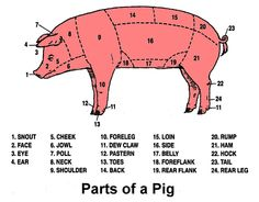 pig labeled body parts diagram sketch coloring page homeschool rh pinterest com pig body parts diagram pig parts diagram blank