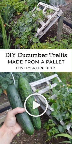 DIY Pallet Cucumber Trellis -- Re-purpose a wood pallet into a quick and sturdy DIY cucumber trellis -- no tools required. It gives space for the plants to grow and makes harvesting an easy task Garden Design DIY Cucumber Trellis made from a Pallet Backyard Vegetable Gardens, Veg Garden, Vegetable Garden Design, Garden Trellis, Edible Garden, Diy Trellis, Garden Plants, Garden Tools, Bean Trellis