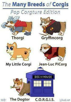 Lol...too cute. I love Corgis
