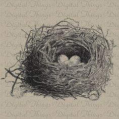 Bird Birds Nest Eggs Illustration