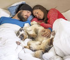 How to Find Dog-friendly Accommodations on the Go #dogs