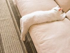 I really feel like this looks comfy. If I were a cat, I'd totally be laying all…
