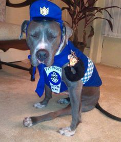 Police Officer Pittie