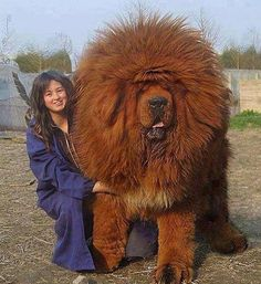 Top 10 Most Expensive Dog Breeds - Hunde - Dogs Huge Dogs, Giant Dogs, I Love Dogs, Giant Fluffy Dog, Cute Big Dogs, Really Big Dogs, Big Fluffy Dogs, Small Dogs, Funny Dogs
