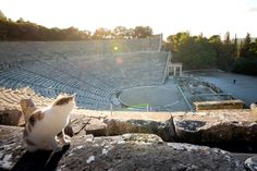 Everyone enjoys a visit to the Ancient Theatre of Epidaurus, in the majestic Pelloponese peninsula in Greece. Contact Path Travel Designs, your own boutique online travel specialist to properly plan your ideal holiday in Greece now! Greece Holiday, Travel Route, Online Travel, Travel Design, Enjoy It, Travel Agency, Plan Your Trip, Touring, Paths