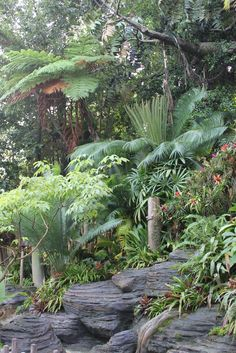 tropical garden this is my dream view even in a foggy Tinicum morning. Pretend its just mist.