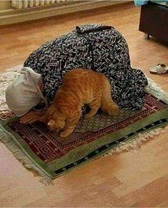 JIBU: Sifa zote njema Anastahiki Allaah Aliyetukuka Mola Mlezi wa walimwengu wote, Swalah na salamu zimshukie kipenzi chetu Mtume Muhammad (Swalla Allaahu 'alayhi wa aalihi wa sallam) na Swahaba zake (Radhiya Allaahu 'anhum) Islamic Images, Islamic Pictures, Islamic Art, Kittens Cutest, Cute Cats, Cute Wallpapers, Wallpaper Backgrounds, Baby Animals, Cute Animals