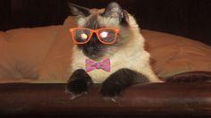 I'm a very smart cat