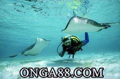 이게게임플레이➽【 ONGA88.COM 】➽게임플레이임플레이➽【 ONGA88.COM 】➽게임플레이영복 회장게임플레이➽【 ONGA88.COM 】➽게임플레이 심야 게임플레이➽【 ONGA88.COM 】➽게임플레이압송 (부산=연합뉴스) 조정호 기자 = 500게임플레이➽【 ONGA88.COM 】➽게임플레이억원이 넘는 회삿돈을 횡령하거나 게임플레이➽【 ONGA88.COM 】➽게임플레이