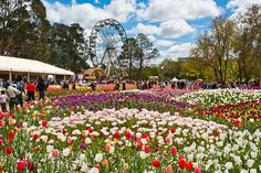 Unless you've had a compelling reason to do so, Canberra is probably one of those cities you haven't visited yet. Well behold, spring is the excuse you need to discover - or rediscover - Australia's underrated capital.  Plan your trip to coincide with Floriade in September (floriadeaustralia.com), a vibrant festival of flower garden designs that is as gorgeous as it is relaxed.