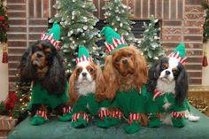 Cavalier elves!
