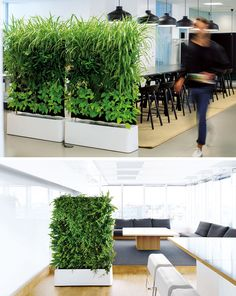 15 Creative Ideas For Room Dividers // These plant walls are a great way to divide spaces because they offer sound absorption and purify the air.