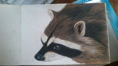 """A raccoon. made only with crayons """"Derwent Watercolour""""."""
