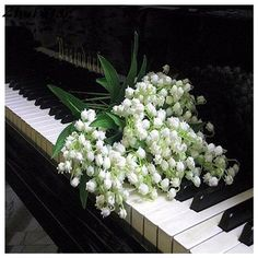 Lily of the valley flowers lying on top of piano keys My Flower, Pretty Flowers, White Flowers, Flower Power, Lily Of The Valley Flowers, Raindrops And Roses, Diy Painting, Flower Arrangements, Wedding Flowers