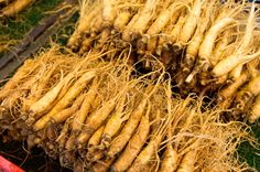 Learn all about suma root the adaptogen superfood, aka brazilian ginseng that has many nutritional & medicinal health benefits.