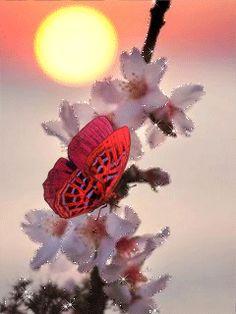 Farfalla su un ramoscello fiorito .