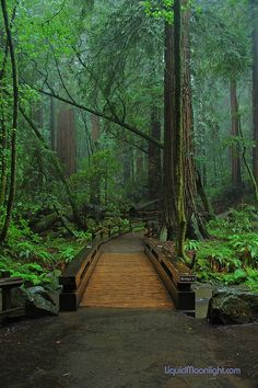 Redwoods - Bridge to paradise by Darvin Atkeson, via Flickr