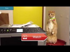 😸 Funny Cats crazy video 😼 Funny Cats crazy video One of the hardest try not to laugh challenges you have ever seen Funny animals are the…