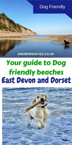 Andrewshayes lists the Top Best East Devon Dog Pet Friendly BEACHES. Plenty of beaches for you and your pet to enjoy on Holiday in East Devon. Unicorn Dog Costume, Italian Greyhound Puppies, Dog Walking Business, Dog Friendly Holidays, Uk Beaches, Basic Dog Training, Group Of Dogs, Military Dogs, Dog Books
