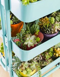 Amp up a bar cart with succulents.