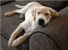 Tips From Hartz: Simple Ways to Remove Dog Hair in Your Home