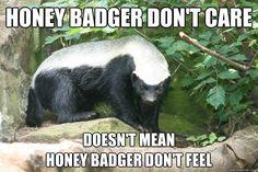 baby honey badger - Google Search Honey Badger, Wildlife Safari, Black Bear, Panda Bear, Weird, Cute Animals, African, Badass, Weapons