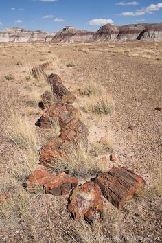 Petrified Forest, Arizona....we stopped here on the way to Disneyland.  My dad had explained that we were seeing a forest of trees turned to rock...this is NOT what I pictured....I felt robbed! #treasuredtravel