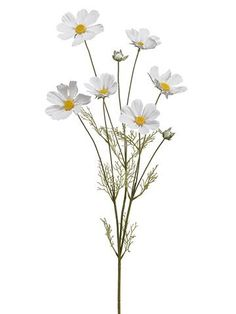 what is cosmos Cosmos Flowers, Fake Flowers, Artificial Flowers, Silk Flowers, Dried Flowers, White Flowers, White Flower Png, Colorful Flowers, Vase Arrangements