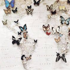 world map with butterfly pins for the places you've been to Smokey Topaz, Map Globe, To Infinity And Beyond, Grafik Design, Just In Case, Whimsical, Valentino, Photoshop, Crafty