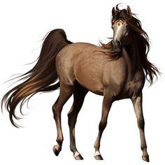 Aisha, Pferd Lipizzaner Brauner #5139806 - Howrse