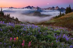 Hot Frosty Buzz  by Miles Morgan on 500px