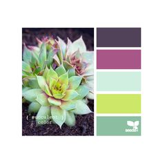 Design Seeds ❤ liked on Polyvore featuring color palettes, design seeds, backgrounds, colors and color scheme