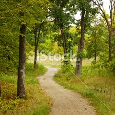 Curving Trail entering Deciduous Forest Royalty Free Stock Photo