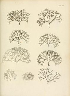 The natural history of many curious and uncommon zoophytes : - Biodiversity Heritage Library Natural World, Natural History, Drawing Tutorials For Beginners, Natural Structures, Sea Art, Botanical Illustration, Botanical Prints, Medusa, Under The Sea