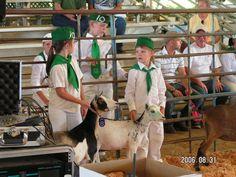 2006 Lake County Fair, Clover Bud Miniature Goat show