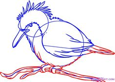 how to draw a kingfisher bird step 4