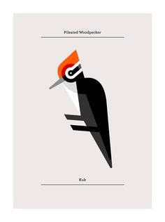 Pileated Woodpecker, Flora and Fauna series,  Birds edition - Josh Brill